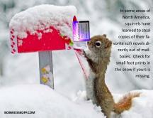 mailbox-squirrel-carbonado